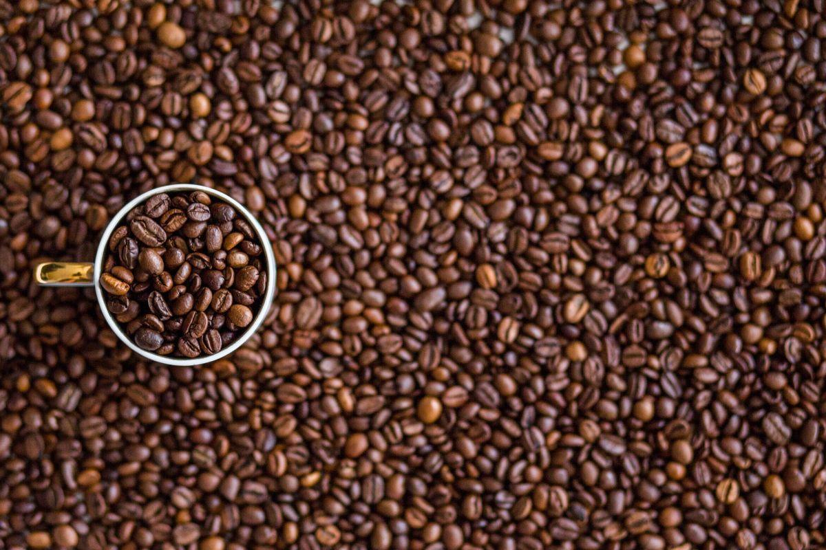 coffee and fatty liver