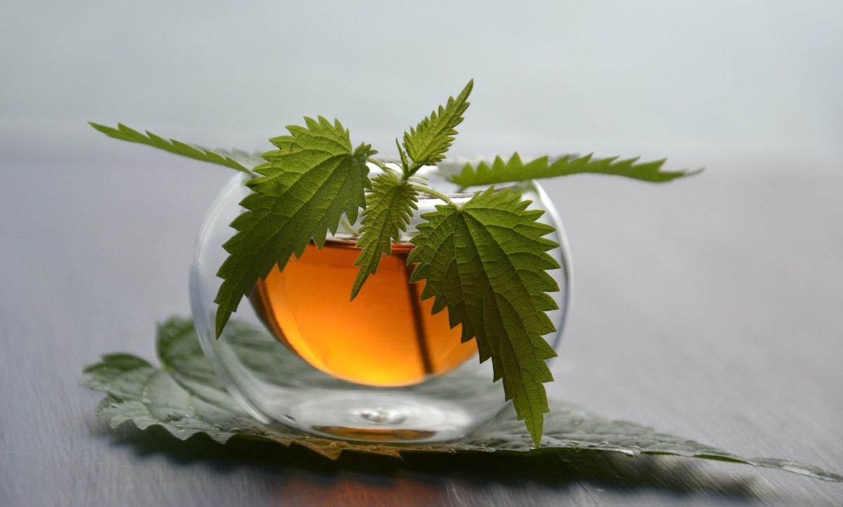 is green tea good for fatty liver