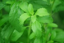 stevia for fatty liver